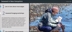 New Hampshire Sea Grant | Seaweed