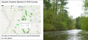 Aquatic Invasive Species in Polk County
