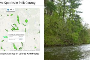 Aquatic Invasive Species in Polk County