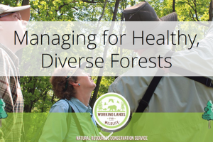 NRCS Managing for Healthy, Diverse Forests Story Map